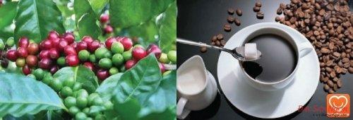 Cà phê Pleiku